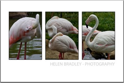bird moreinteresting 734683 How to select and compose a Triptych in Lightroom