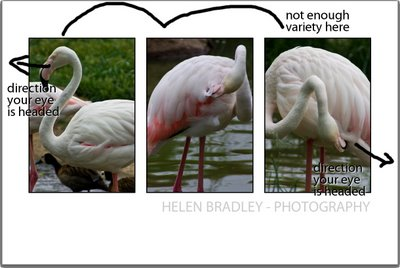 birdproblem 745904 How to select and compose a Triptych in Lightroom